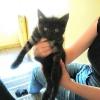 Wyrzucona mała kociczka szuka domu
